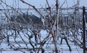 frozen vineyard vines