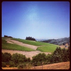 Willakenzie Estate WBC12