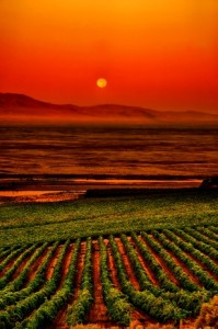USA, Washington, Pasco. Harvest Moon over Sagemoor vineyard.
