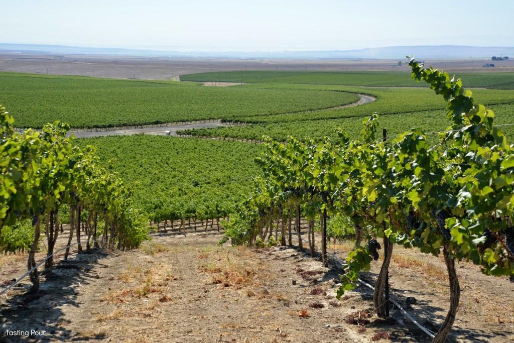 coyote-canyon-vineyards